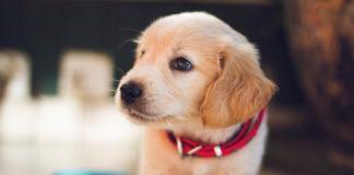 consigli per scegliere il veterinario