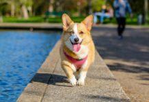 come addestrare cani