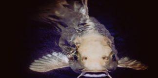 pesci particolari